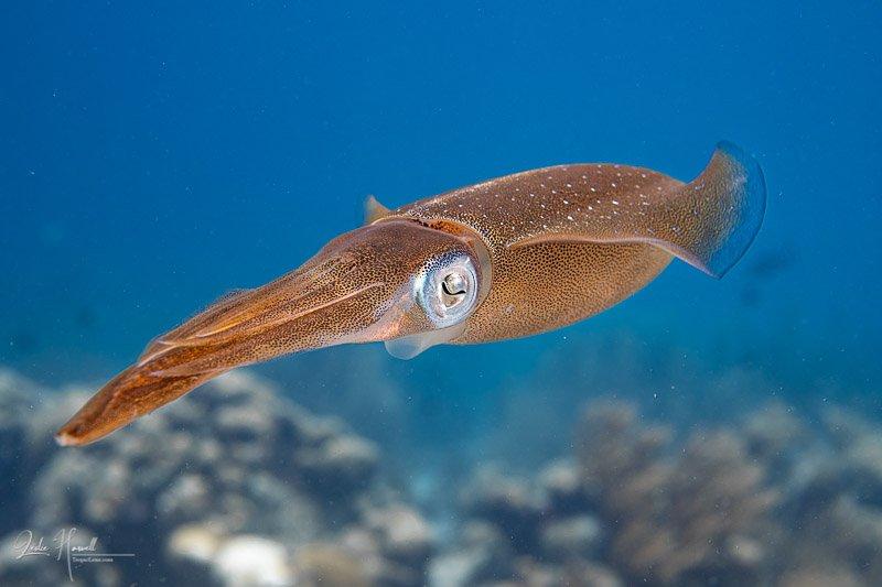 Squid_eyes_ambiant_light_002-2.jpg