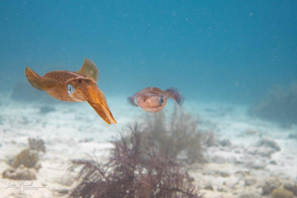 Squid_eyes_ambiant_light_10-13_002.thumb.jpg.6bc183e441481482fd737bd78ddb7e22.jpg
