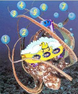 octopusSMALL1.jpg