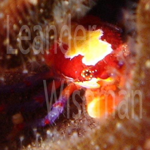leanderwiseman_squat_1_5.jpg