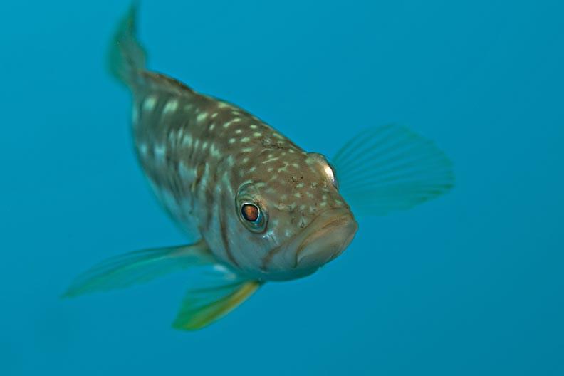small_kelpbass.jpg