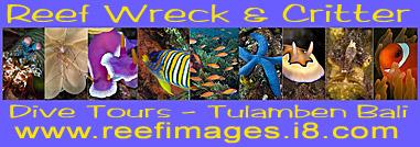 Reef_Wreck___Critter.jpg