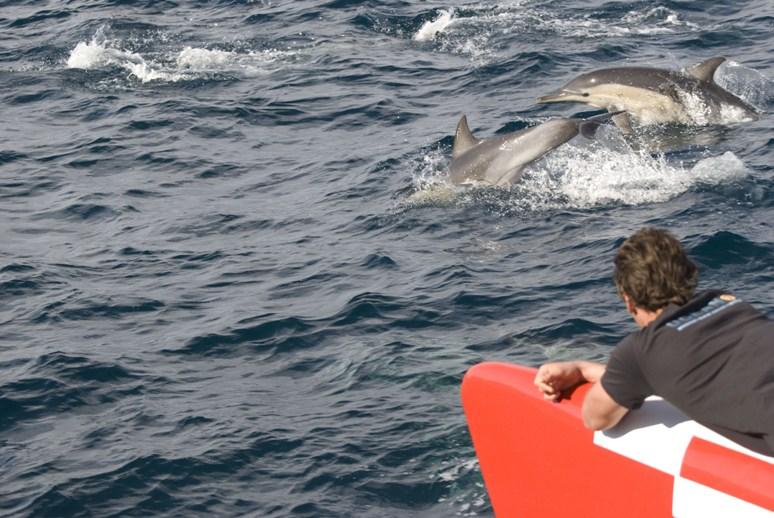 dolphins_on_bow_e.jpg