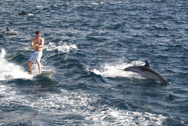 surfing_with_dolphins_3_e.jpg