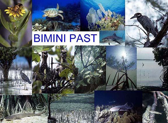 Bimini_past_72dpi_a.jpg