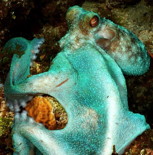 AlienOctopus.jpg