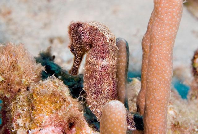 Seahorse_Web.jpg