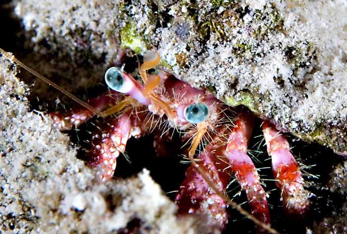 Hermit_Crab_Web.jpg