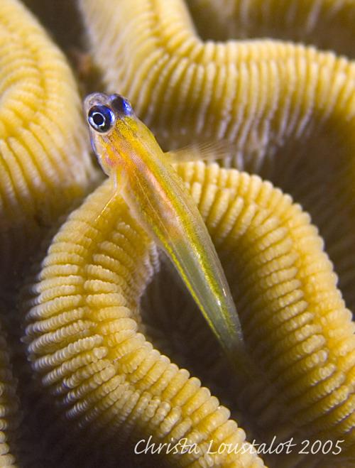 Curacao_2005_0058.jpg