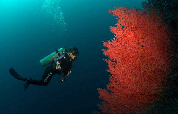 Sipadan_Diver_with_wall_fan_coral_TG_DSC_7314.jpg