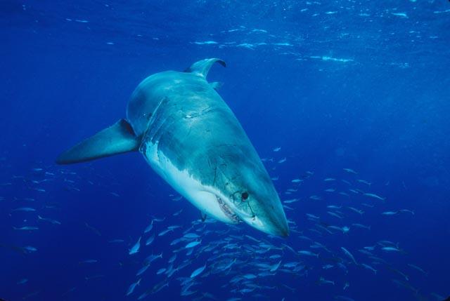 wet_shark1.jpg
