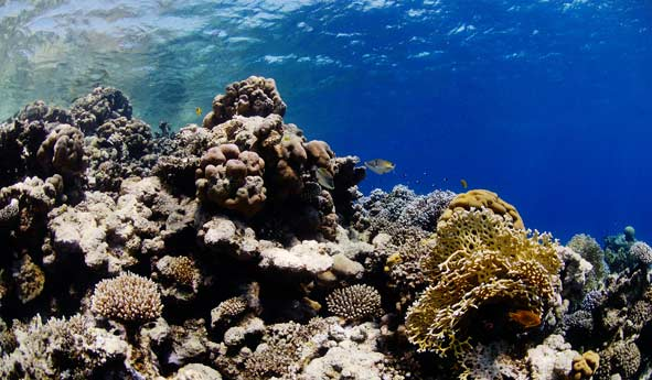 Red_Sea_5m.jpg