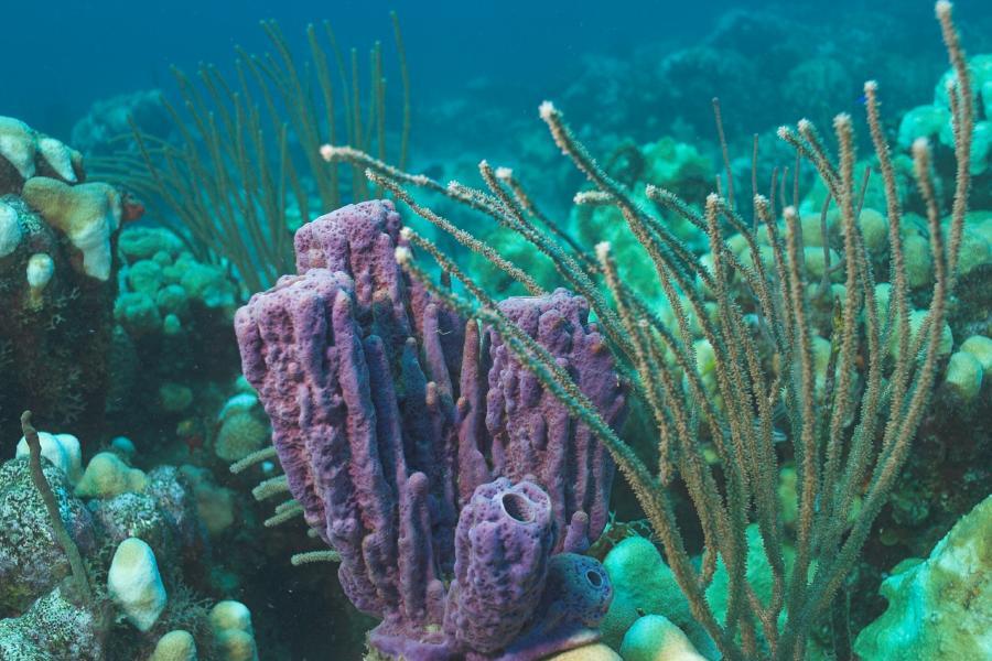 011_Purple_Coral.jpg