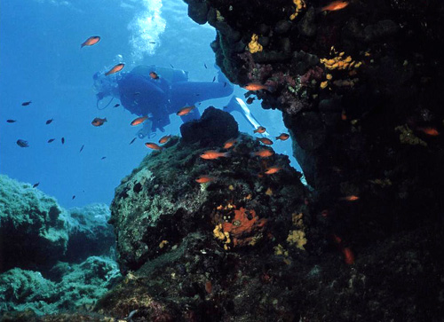 diver_passes_web.jpg