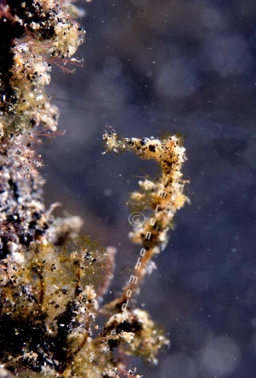 seahorse_2.jpg