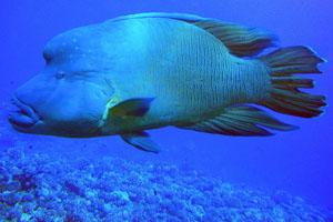 Tahiti_BoB2.jpg