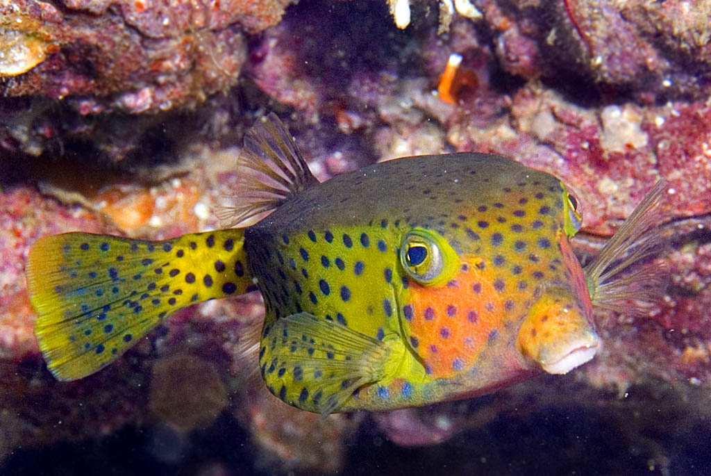 boxfishe.jpg
