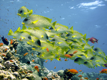Sweetlips_2007_2_SM.jpg