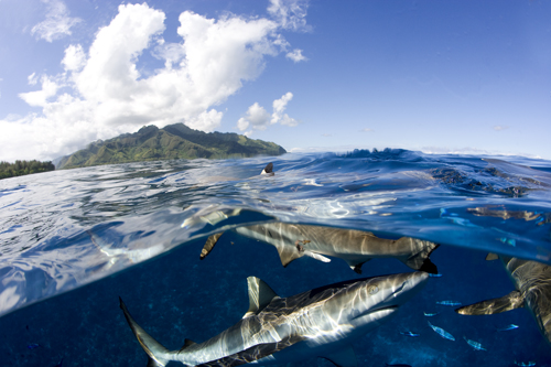 Frink_FrenchPolynesia_2128.jpg
