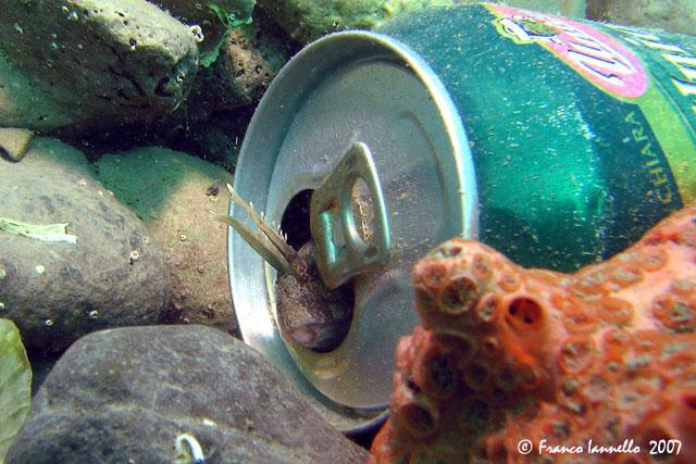 BeerFish.jpg