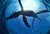 Liopleurodon's Photo