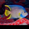 Nauticam EM5 with viewfinder - last post by Bob_W