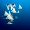 Right place, right time, chance to help a manta. - last post by NWDiver