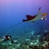 USB control of underwater camera - last post by ErolE