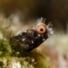 FOR SALE: Nauticam Macro Port 87 (Nikon 105 VR, Canon EF 100 USM) - last post by eyeguy