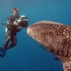 William Trubridge's world record freedive to 100 meters - last post by Nick Hope