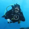 Little Cayman Dive Video - last post by GlenElectronic