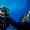Sea & Sea YS-250 circular light tube - last post by jasonhartup