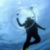 Do Strobes and Video Lights Negatively Impact Sea Life - last post by DS256