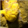 Frogfish3's Photo