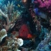 Great Barrier Reef Liveaboard - last post by omnireef