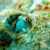 "Red Sea ""Rhinoceros"" blenny - last post by Etroyer"