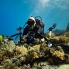 Scuba Diving Egypt Red Sea Dahab - last post by lior_shenhar