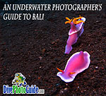 DivePhotoGuide presents Underwater Photographer's Guide to Bali Photo
