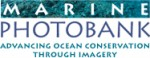 Call for entries: Oceans in Focus competition Photo