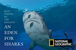 National Geographic: An Eden for Sharks Photo