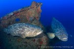 Wetpixel goliath grouper, shark and dolphins trip journal Photo
