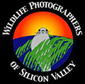 Eric Cheng speaks to Wildlife Photographers of Silicon Valley Photo