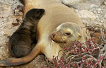 Sea lions massacred in Galápagos Islands Photo