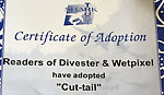 Wetpixel and Divester readers receive adoption papers for Cut-Tail Photo
