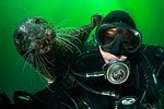 Local San Francisco underwater photographer Kawika Chetron missing Photo
