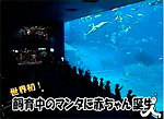 Live manta birth in captivity Photo