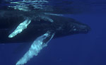Whaling and whale watching go head to head Photo