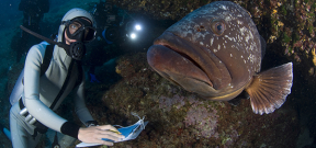 New research supports marine reserves as local economic enhancers Photo