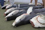 Support the Shark Conservation Act of 2009 Photo