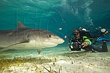 Wetpixel Bahamas Shark Expedition Photo